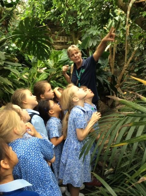 web-yr2-rainforest-1